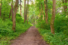 Pedestrian path leads into woods Stock Photos