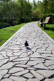 A pedestrian path made of stones of irregular shape with a dove. Technologies, construction stock photo