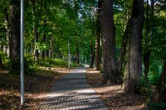 Pedestrian path in the park among the old high lindens royalty free stock photography