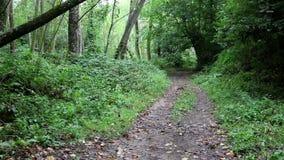 Pedestrian path through the woods. A pedestrian path through the woods stock video
