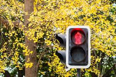 Pedestrian red light against yellow leaves in autumn. Chengdu, China Royalty Free Stock Image