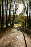 Pedestrian road in the forest Royalty Free Stock Photos