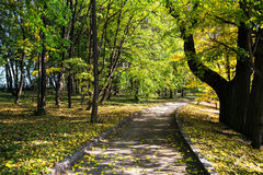 A pedestrian road in a park under green trees Royalty Free Stock Photography