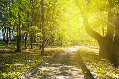 Pedestrian road in a park under green trees Royalty Free Stock Images