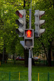 Pedestrian traffic lights on trees background. Pedestrian traffic lights on the trees background Stock Photography