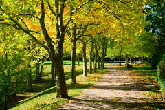 Pedestrian walkway for exercise lined up with beautiful fall tre. Es Royalty Free Stock Images
