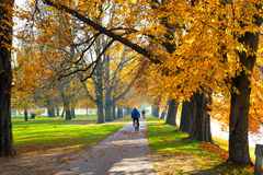 Pedestrian walkway. For exercise lined up with beautiful fall trees Royalty Free Stock Photo
