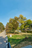 Pedestrian walkway for exercise lined up with beautiful tall tree Stock Photos