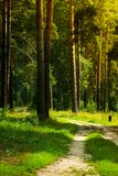 Pedestrian walkway. For exercise lined up with beautiful tall trees Stock Photo