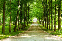 Pedestrian walkway. For exercise lined up with beautiful tall trees Royalty Free Stock Photo