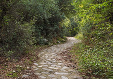 Pedestrian walkway in forest Stock Images
