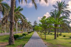 Pedestrian walkway framed with trees and palm trees on both sides with partly cloudy sky in a summer day, at a public park. Pedestrian walkway framed with trees stock photography