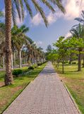 Pedestrian walkway framed with trees and palm trees on both sides with partly cloudy sky in a summer day at a public park. Pedestrian walkway framed with trees stock photography