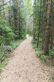 Pedestrian walkway in forest. Pedestrian walkway through green summer forest Royalty Free Stock Photos