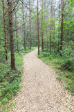 Pedestrian walkway through summer forest. Pedestrian walkway through green summer forest Royalty Free Stock Images