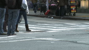 Pedestrians and traffic (1 of 16). Pedestrians and vehicles cross a city intersection (time lapse stock video footage