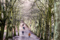 Pedestrians in a tree-lined avenue in winter. Long exposure of pedestrians walking in a tree-lined avenue in winter with slow and fast motion blur, high angle stock photo
