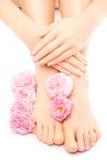 Pedicura y manicura con una flor color de rosa rosada Imágenes de archivo libres de regalías