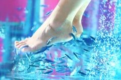 Pedicure鱼温泉- rufa garra 库存图片