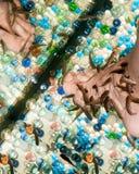 Pedicure鱼garra rufa 库存图片