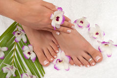 pedicure Royaltyfri Foto