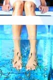 Pedicure del balneario de los pescados Imagen de archivo libre de regalías