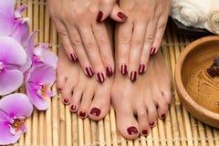 Pedicure e tratamento de mãos nos termas do salão de beleza imagem de stock royalty free