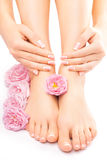 Pedicure en manicure met een roze roze bloem Royalty-vrije Stock Afbeeldingen