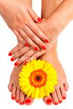 Pedicure feet of a young woman Royalty Free Stock Image