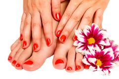 Pedicure feet of a young woman Stock Photography