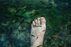 Pedicure Fischbadekurort Badekurfische Rufa Garr Nahaufnahme von Fischen und von männlichem Bein im cenote Cancun Mexiko stockbilder
