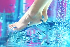 Pedicure fish spa - rufa garra. Pedicure fish spa. Rufa garra fish spa treatment. Close up of fish and feet in blue water Stock Image