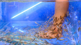 Pedicure fish spa treatment. Close up of fish and feet in blue water Royalty Free Stock Image