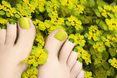 Pedicure in flowers plants. royalty free stock photo