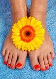 Pedicure on foot Stock Photos