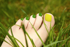 Pedicure grass. Stock Photography