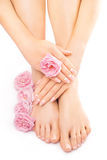 Pedicure and manicure with a pink rose flower Royalty Free Stock Photography