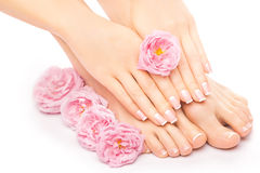 Pedicure and manicure with a pink rose flower Stock Photography