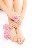 Pedicure and manicure with a pink rose flower Royalty Free Stock Image