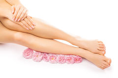 Pedicure and manicure with a pink rose flower Royalty Free Stock Photos