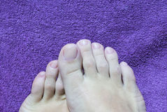 Pedicure. Royalty Free Stock Image