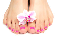 Pedicure rosa con un fiore dell'orchidea Immagine Stock