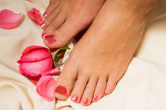 Pedicure with rose Stock Images
