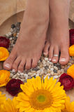 Pedicure Spa Royalty Free Stock Image
