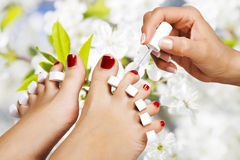 Pedicure in the spa salon. In the garden royalty free stock image