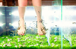 Pedicure spa treatment, rufa garra fish Royalty Free Stock Image