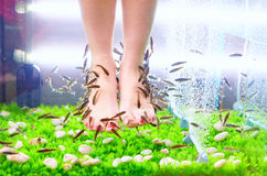 Pedicure spa treatment, rufa garra fish Royalty Free Stock Photography