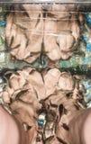 Pedicure'u żeńskich nóg rybi garra rufa Zdjęcie Royalty Free