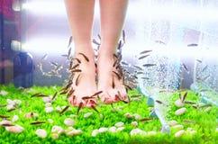 Pedicure'u zdroju traktowanie, rufy garra ryba Fotografia Royalty Free