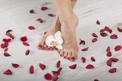 Pedicure vermelho do gel bonito com orquídea e pétalas ao redor, pés cruzados Fotografia de Stock Royalty Free